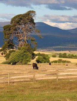 田舎、動物の放牧