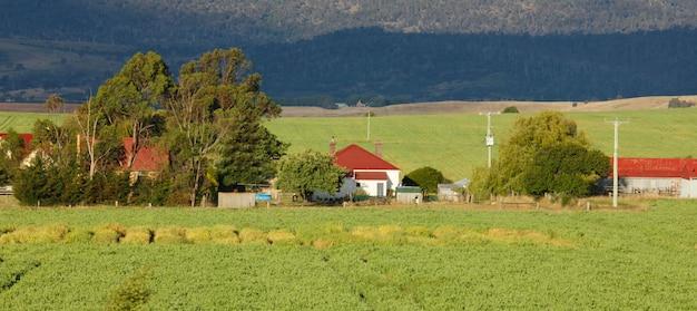 Ферма и деревья