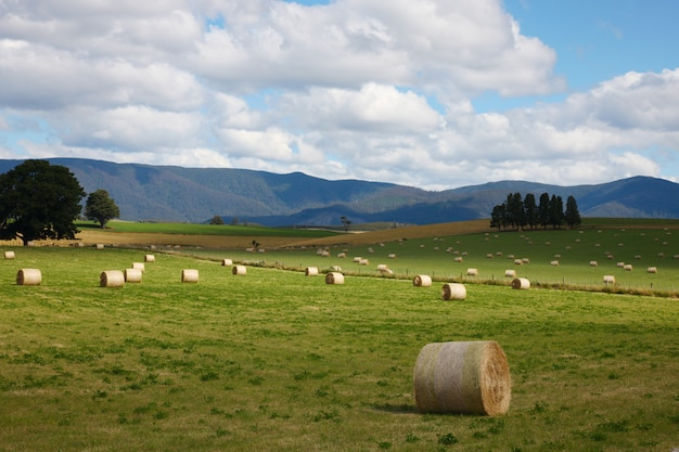 風景の収穫と山