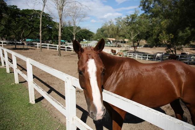 フェンスの後ろに馬