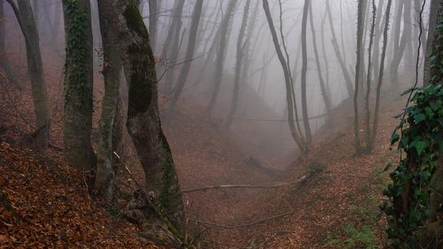 霧の紅葉の森