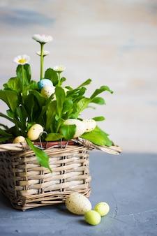 鍋に最初の春の花