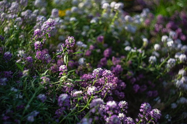 庭に咲く植物