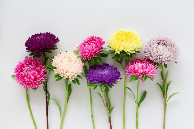 いくつかのカラフルなアスターの花