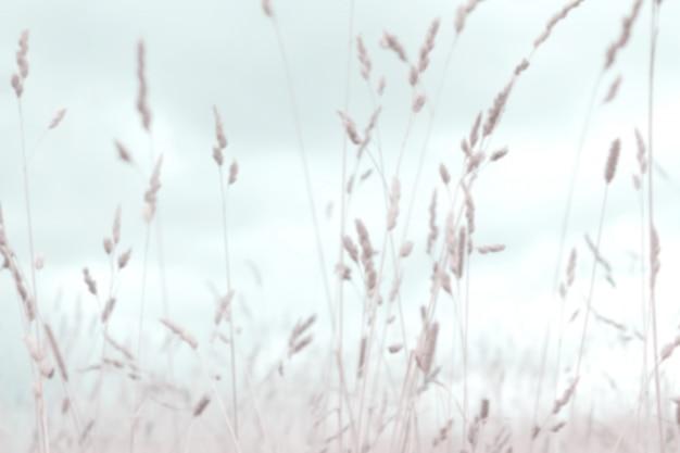 ピンぼけの秋の草をぼやけています。