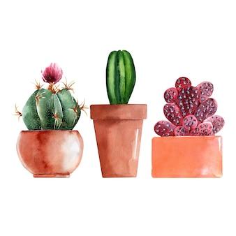 カラフルなポットにサボテンの種類と水彩イラスト