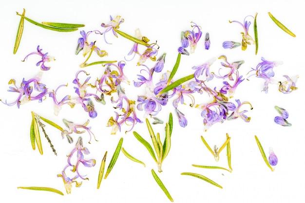新鮮なローズマリーと繊細な紫色の花と緑の葉。