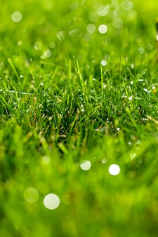 クローズアップの緑の芝生、新鮮で濡れています。ボケと太陽フレアの美しい質感。
