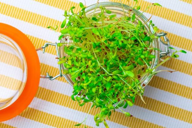 発芽した新鮮で生のアルファルファもやし。健康的で健康的な食事。閉じる。