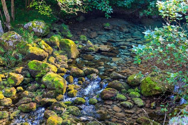 Кристально чистые воды горной реки выходят из оттепели. национальный парк пикус де европа (кантабрия, астурия, кастилия и леон - испания). частный форелевый и лососевый заповедники.
