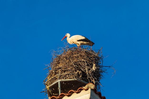 Аист в гнезде на крыше церкви. солнечный день и голубое небо.