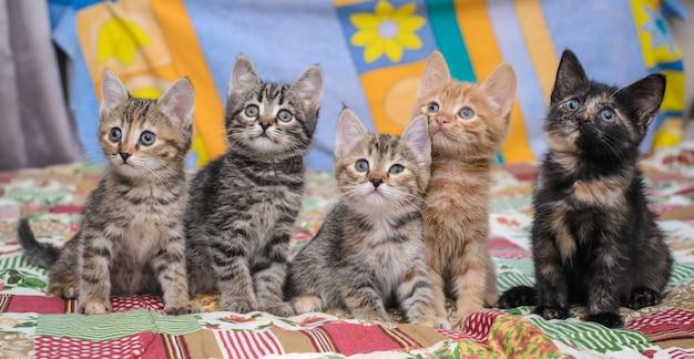 Маленькие котята на ярком одеяле