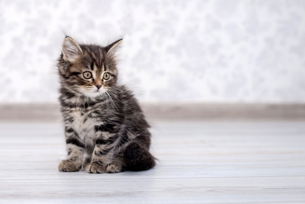 Маленький забавный котенок на полу