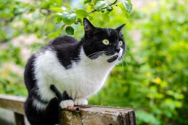 庭の黒と白の猫
