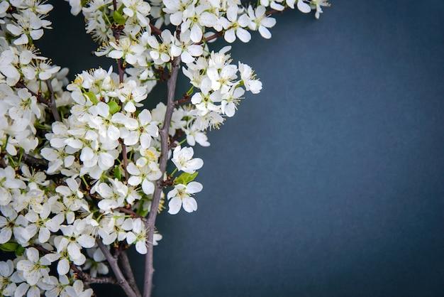 暗い背景に梅の花の枝