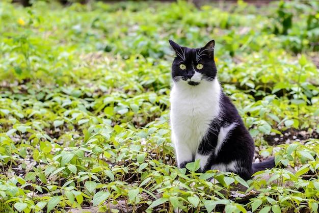 草の中に座っている黒と白の猫