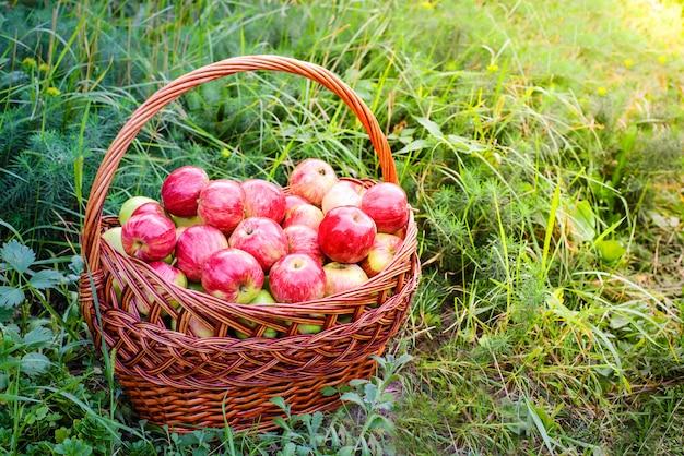 Красные яблоки в корзине на зеленой траве в саду