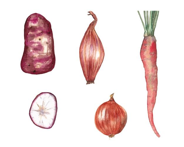 赤い野菜のセット。ニンジン、ポテトとスライス、タマネギ、エシャロット。水彩イラスト。