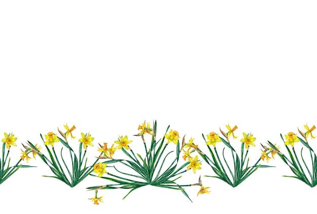 Границы реалистичных желтых нарциссов на стеблях с листьями. акварельные иллюстрации