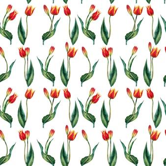 Бесшовный фон из реалистичных красных тюльпанов на стеблях с листьями на линии заказа. акварельные иллюстрации