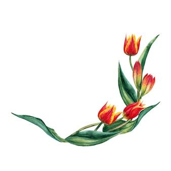 Полукруглая гирлянда из реалистичных красных тюльпанов на стеблях с листьями. акварельные иллюстрации