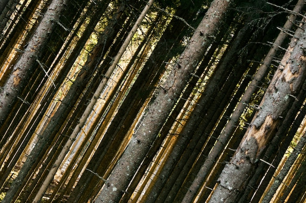 Осенние лесные деревья. природа стола зеленый дерево солнечного света.