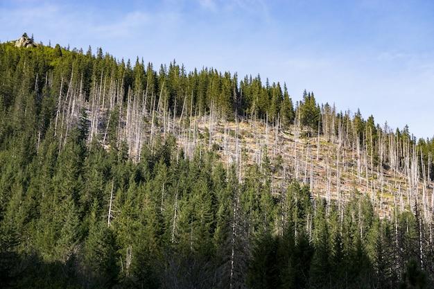 Мертвые деревья в лесу. эта фотография изображает засуху и изменение климата.