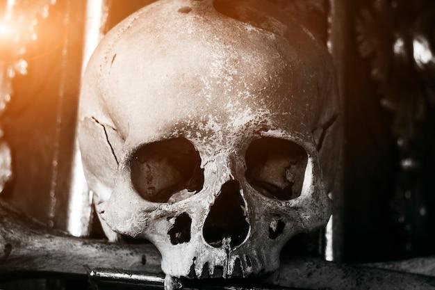 本物の人間の頭蓋骨。骨格。死の男