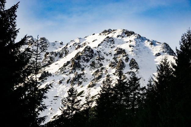 Красивые заснеженные горные вершины и деревья
