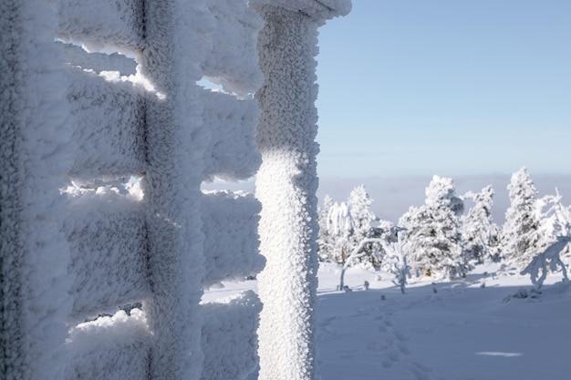 Вид на деревья, покрытые снегом через снег.