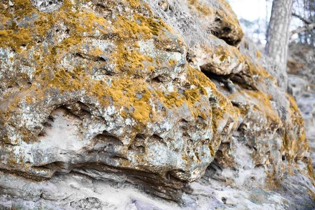 苔で覆われた岩の起伏。