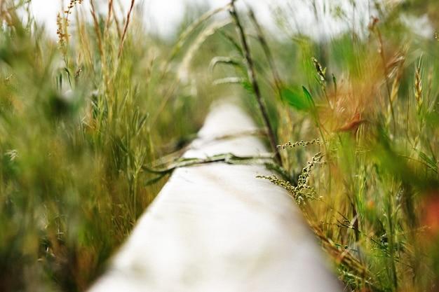 線路には草が生い茂っています。鉄道