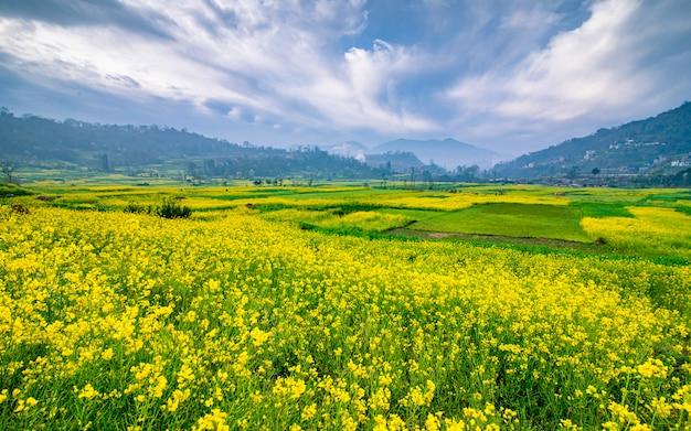 ネパール、カトマンズの谷でブロッサムマスタードファームの美しい春の景色