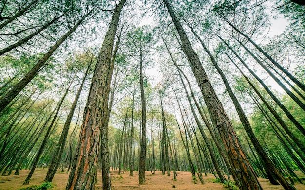 ネパール、カトマンズの美しい森の木の自然