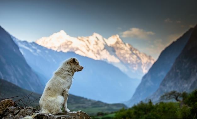 犬、ツム渓谷、ネパールで山を見て、