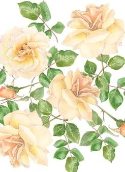 クリーム色のバラとつぼみ