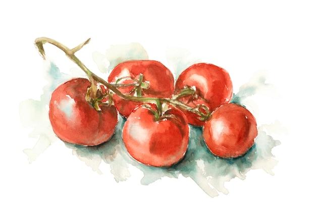白地に赤いトマトの枝