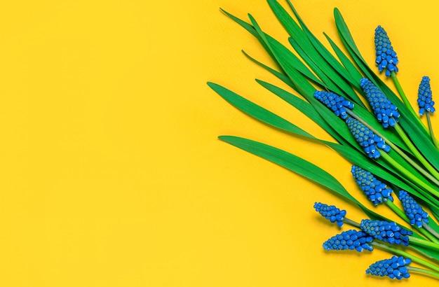 花の組成物。黄色の背景、フラットレイアウトに青い春ムスカリ