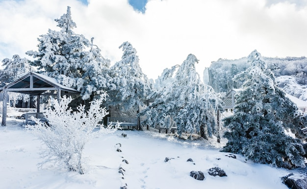 Зимний пейзаж на вершине горы с заснеженными деревьями