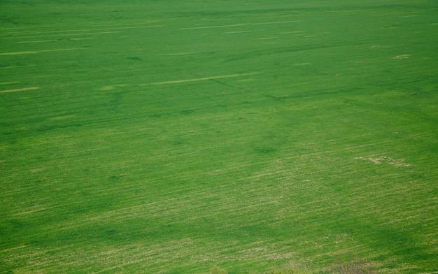 牧草地の緑の草の空撮