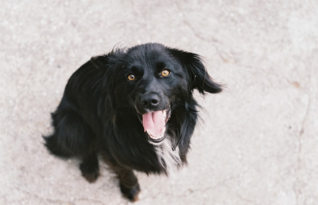 面白い黒犬。