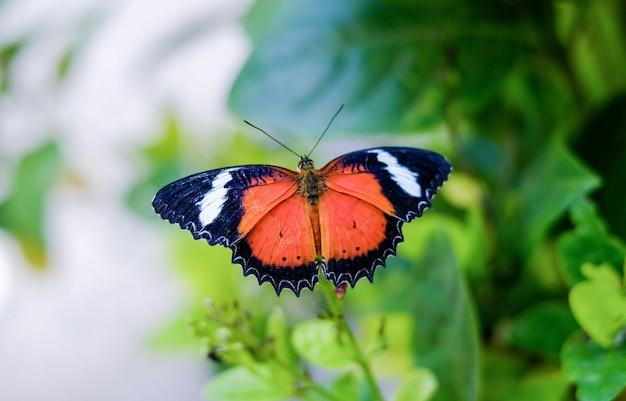 庭の茂みの葉の上に座って蝶