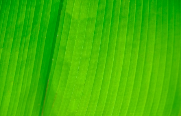 ヤシの葉の質感。熱帯の木の葉のテクスチャ。