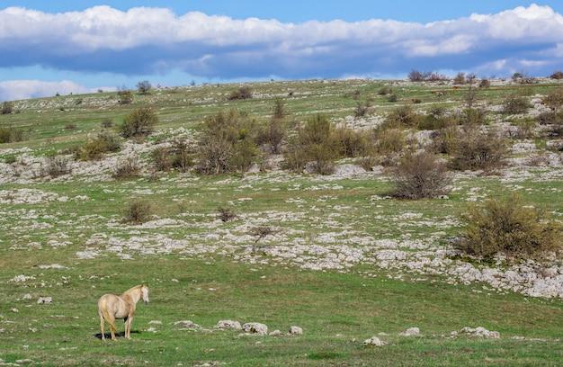 山の野生の白い馬