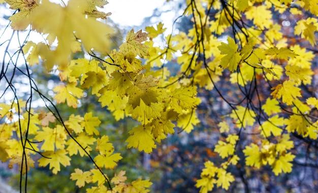 Цвета осени, лес в горах осенью. осенние листья на деревьях.