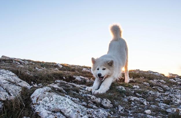 山の日没の犬