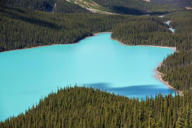 カナダ、アルバータ州バンフ国立公園の美しいペイトー湖