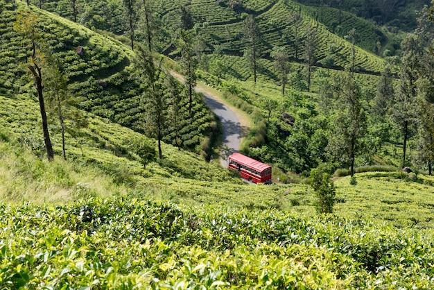 Красный автобус в чайной плантации в шри-ланке