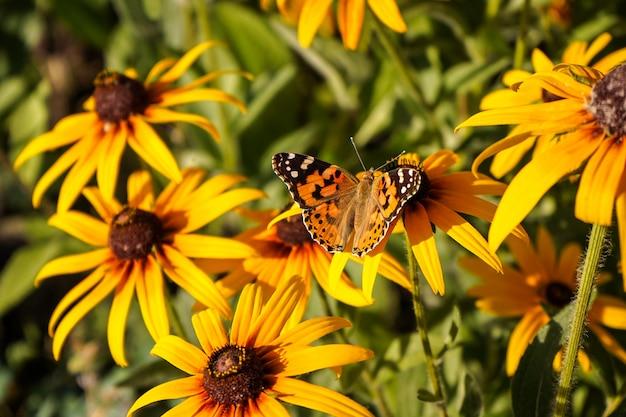 花の上に座って明るい蝶