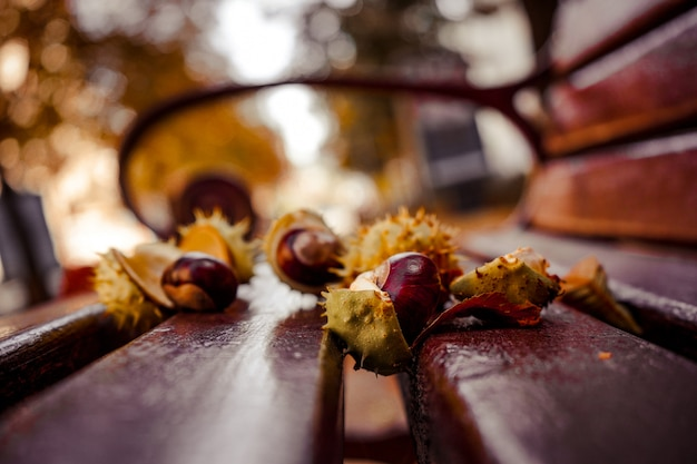 Свежие каштаны лежат на скамейке на фоне осенних листьев. осенний пейзаж